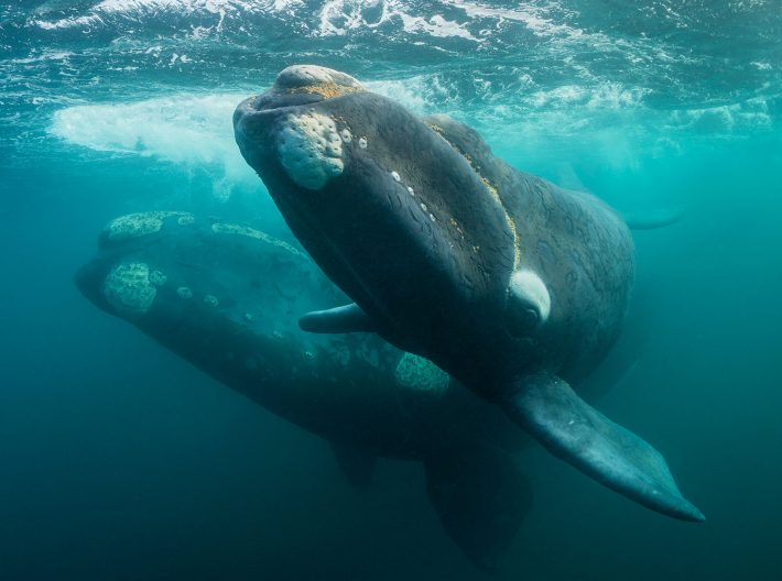 Underwater view of whales